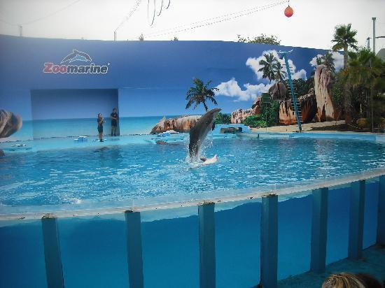 Clube Albufeira Resort: zoomarine