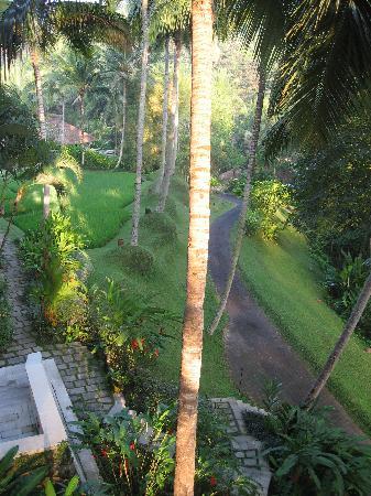 Four Seasons Resort Bali at Sayan: view from restautant