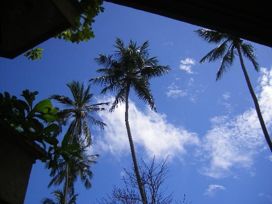 โรงแรมรอยัล ปาล์ม บีช: Veiw from sunbed