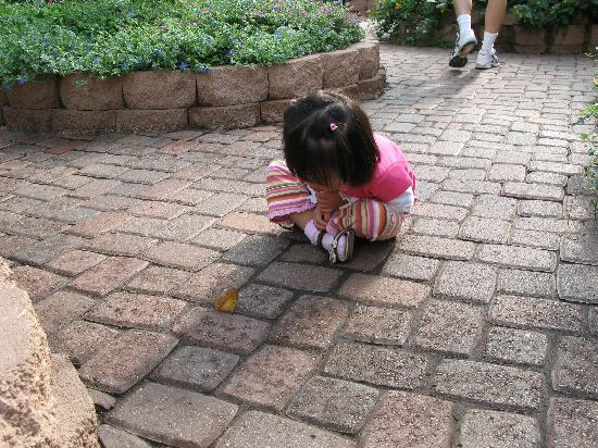 The Original Mackinac Island Butterfly House & Insect World: Its great for kids