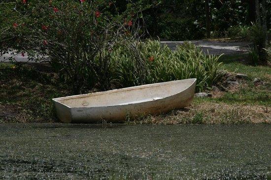 馬拿瓜照片