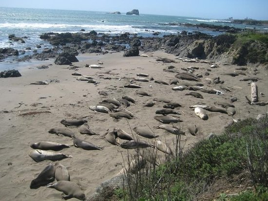 Elephant Seal Beach, near Cambria CA.