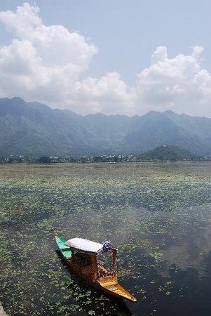 Dal Lake, Srinagar, Cachemira. That was my Shikara