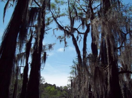 "Uncertain, TX: ""Welcome to De Swomp!"" pt 2 We were in a canoe floating through the Cypress trees. What ane awes"