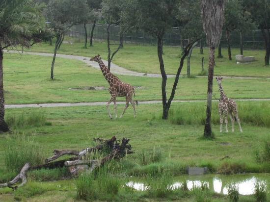 Animal Kingdom Hotel Reviews