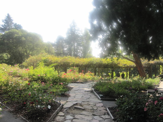 Berkeley Municipal Rose Garden