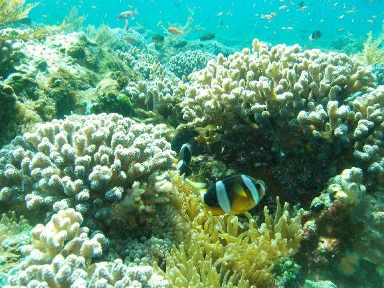 Reef Seen Divers' Resort: coral