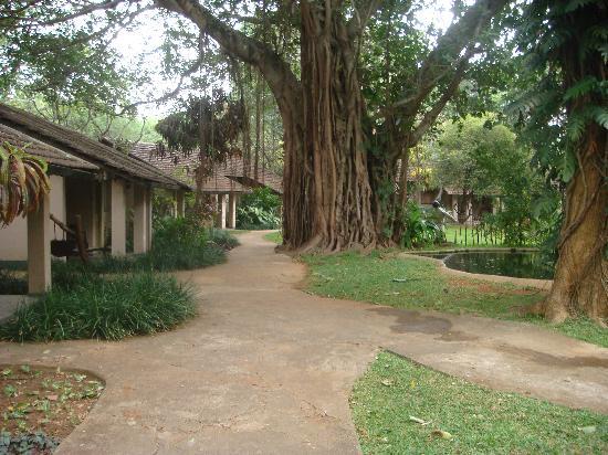 Sigiriya Village Hotel : Village setting