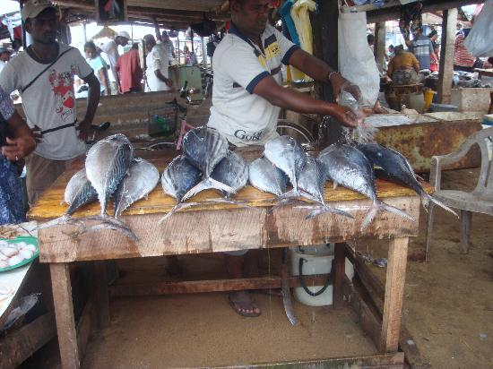 Negombo Fish Market Picture Of Jetwing Sea Negombo