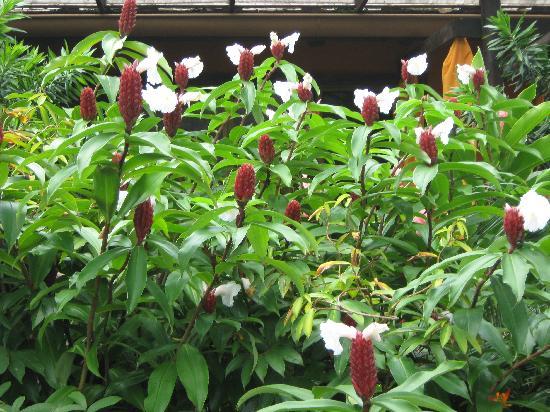 Nayara Resort Spa & Gardens: Exotic Flowers