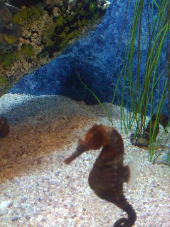 North Carolina Aquarium at Pine Knoll Shores: I had never seen a live seahorse before!!