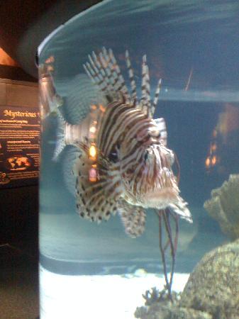 North Carolina Aquarium at Pine Knoll Shores: Oops, so ugly its beautiful!
