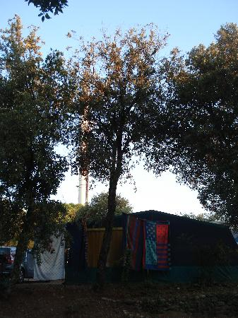 Camping les Pins Parasols : une antenne relais (cachée dans les arbres)
