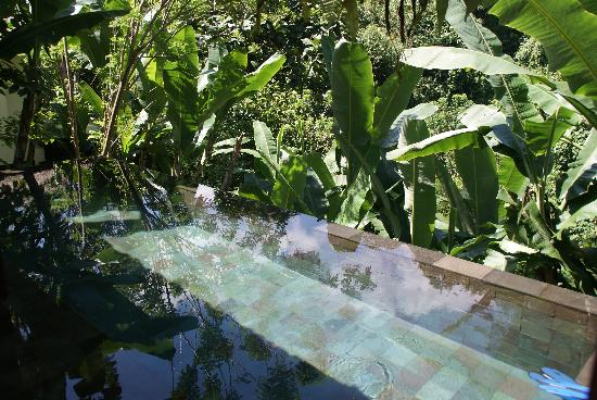 อุบุด แฮงกิ้งการ์เดนส์ บาย โอเรียนท์เอ็กซ์เพรส: piscine privée de la villa