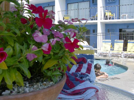 Sea Hawk Motel: nice flowers on pool deck