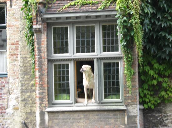 Cote Canal: Caroline's dog Fidele in the window of the Inn