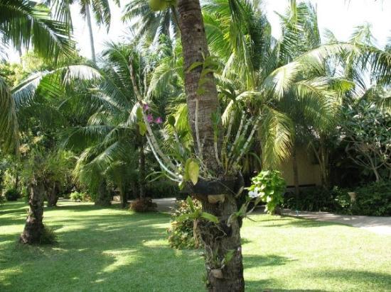 Centara Koh Chang Tropicana Resort: Trädgården på Tropicana, Koh Chang