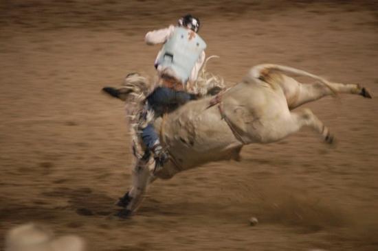 โคดี, ไวโอมิง: Rodeo en Cody. Wyoming