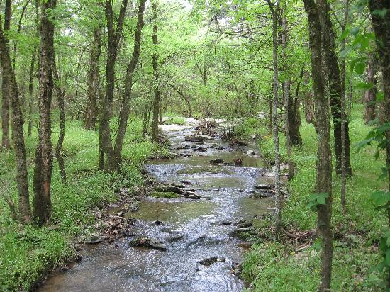 Oden, AR: Pretty stream
