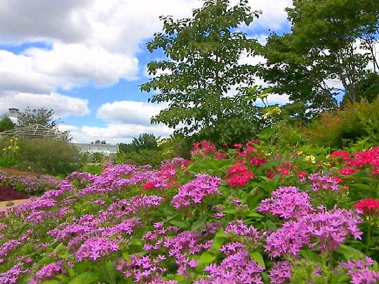 Flowers Picture Of Lewis Ginter Botanical Garden Richmond Tripadvisor