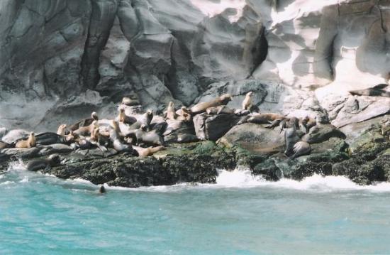 Guerrero Negro, Mexico Lobera, o lo que es lo mismo, guarida de lobos marinos