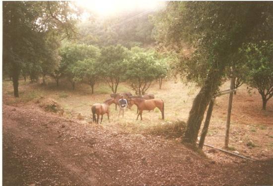 Grosseto, Italien: cavalli allo stato brado