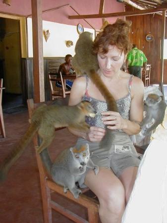 Antsiranana (Diego Suarez), มาดากัสการ์: Bref , une patrouille de lémuriens !!!