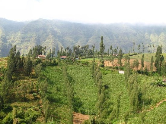 Probolinggo, Ινδονησία: Gunung Bromo, Indonesien