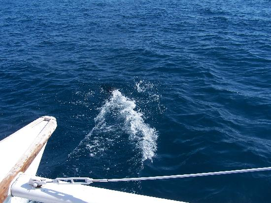 Parador Resort and Spa: Dolphins in the ocean below the hotel