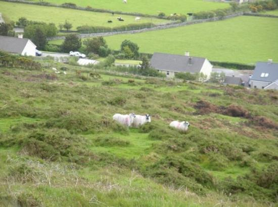 Dingle, Ireland: No one in sight on this beautiful Sunday. Just me and all the sheep on the mountain. Very rocky