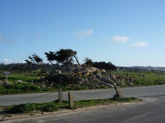 Monterey (CA) United States  city photos gallery : ... Beach, CA, United States Picture of Monterey, Monterey Peninsula