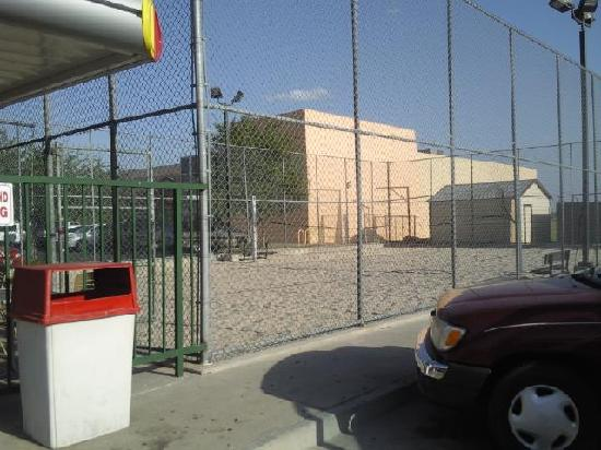 Edinburg, TX : sonic volleyball court