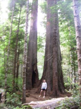 เครสเซนต์ซิตี, แคลิฟอร์เนีย: Redwoods national park