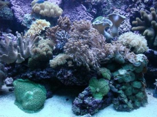 L'Aquarium de Barcelona: Barcelone