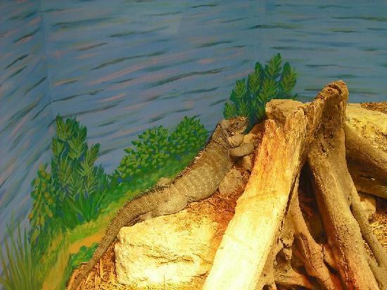 National Mississippi River Museum & Aquarium: Big Guy
