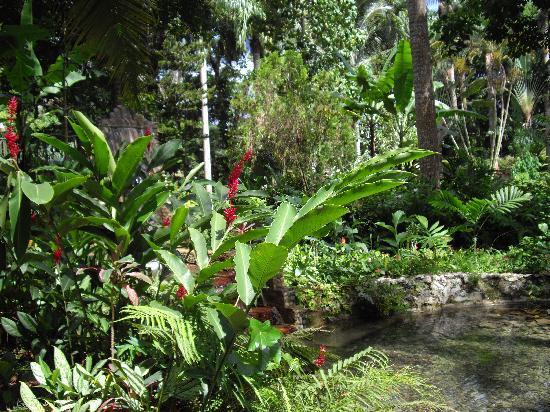 Lush and beautiful garden.