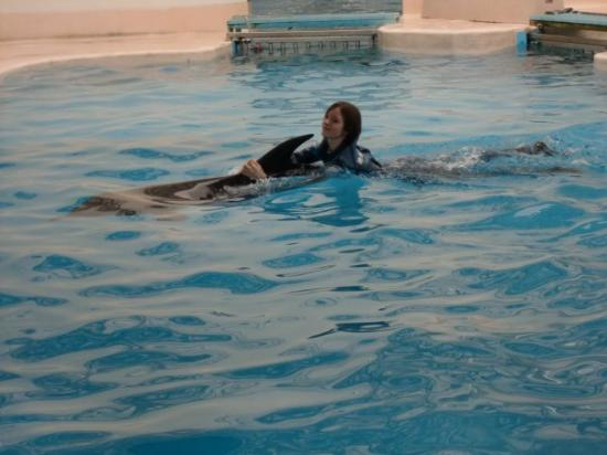 Hualien FarGlory Hotel: swimming with the dolphin X3