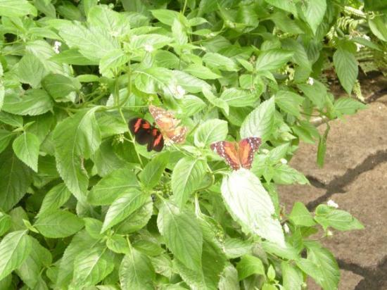 Fjarilshuset (Butterfly House) ภาพถ่าย