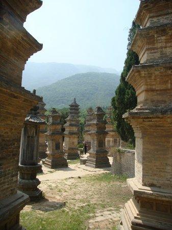 Shaolin Temple : 站在塔林上眺望远山