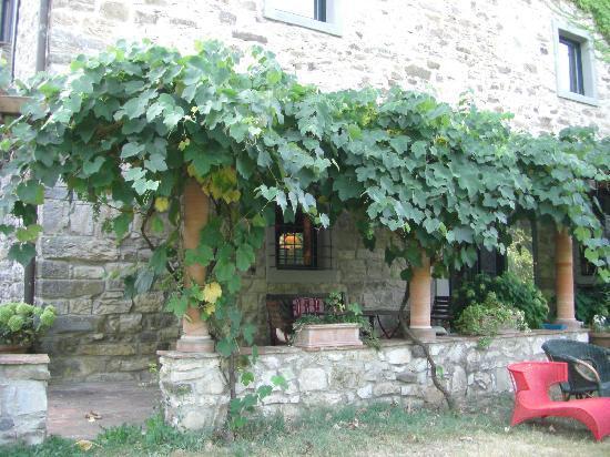 Casa Palmira: 夏はブドウ棚の木陰で本を読むのも贅沢な時間です