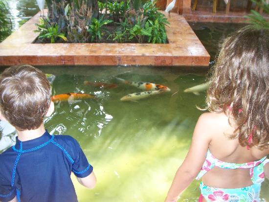 Iberostar Tucan Hotel: feeding the fish