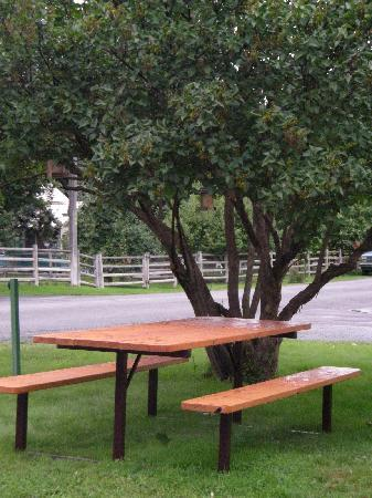 Falls Motel: We had our morning coffee at the picnice table by the lilac tree, which was next to our room.