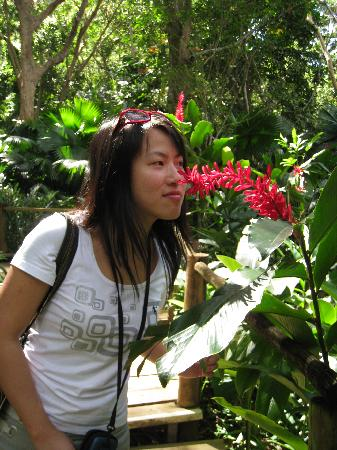 Garden of the Sleeping Giant : Red flower in the forest