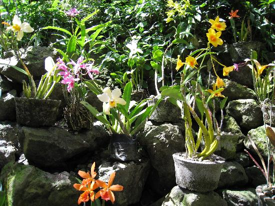 Garden of the Sleeping Giant: Orchids