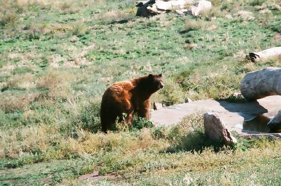 Bear Country USA: Brown Bear Babyland