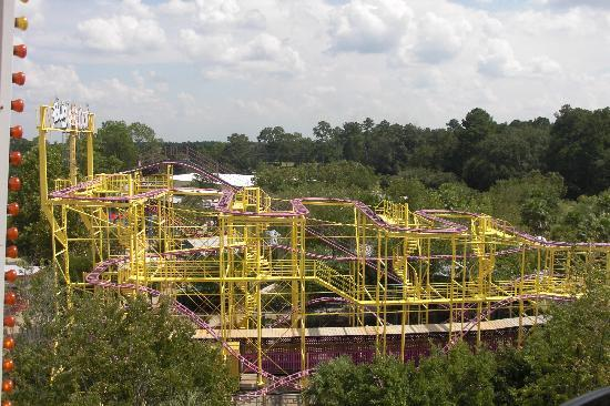 Valdosta, GA: Bug Out Coaster