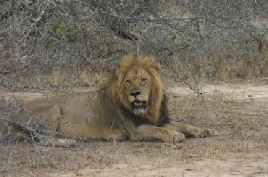 Londlozi Private Game Reserve: impressive boy