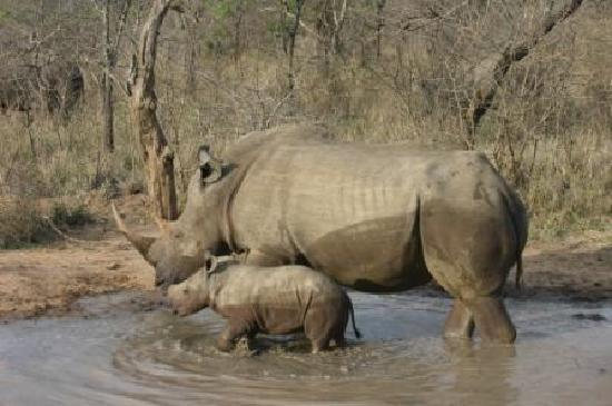 Londlozi Private Game Reserve: Mum and baby!