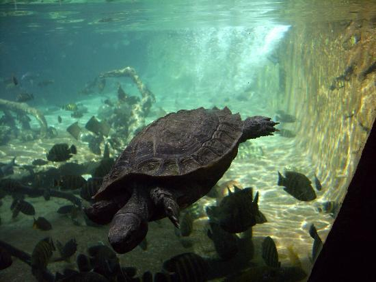 aquario: fotografía de Bioparc Fuengirola, Fuengirola - TripAdvisor