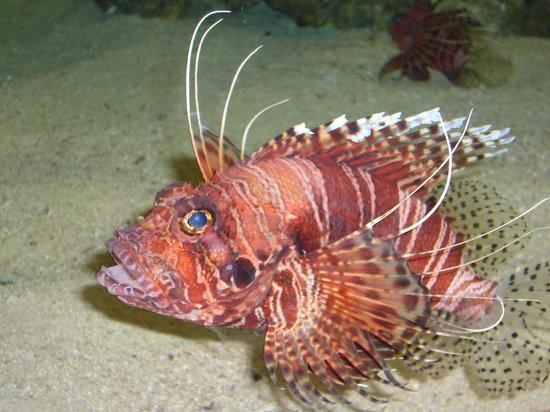 Universeum: Fish